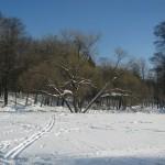 Поляна в Удельном парке 1