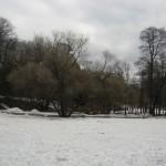 Поляна в Удельном парке 3