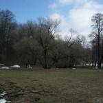 Поляна в Удельном парке 4