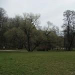 Поляна в Удельном парке 5