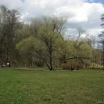 Поляна в Удельном парке 6