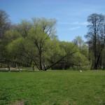 Поляна в Удельном парке 7