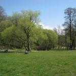 Поляна в Удельном парке 8