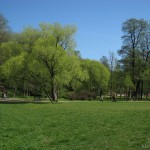 Поляна в Удельном парке 9