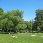 Поляна в Удельном парке 10