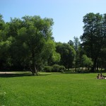 Поляна в Удельном парке 11