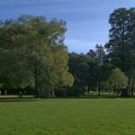 Поляна в Удельном парке 14