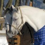 Лошадиная любовь
