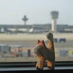 Кот провожает самолет