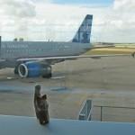 Кот в аэропорту Остина