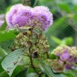 Охраняю цветы жизни