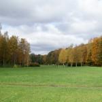 Большая поляна в Удельном парке