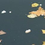 Листья падали