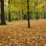 Золотой ковер в Удельном парке