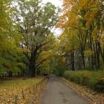Проезд между Рашетова и Лагерной