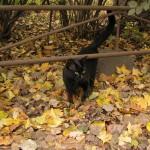Кот ученый (или наученный)