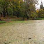 Родниковое озеро