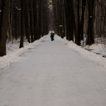 Снежная дорога в парк