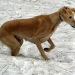 Вот собачий снег!