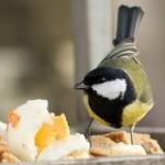 Может яичком заесть?