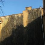 """""""Высокая, покрытая мхом стена..."""" Ботаническое чудо на улице Писарева."""