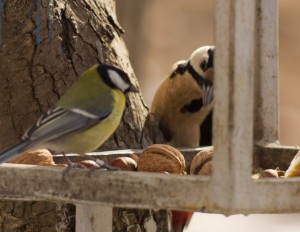 Синичка просит дятла расколоть орех