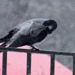 И говорит ворона - отстань мужик