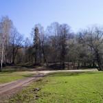Начало мая. На большой поляне в Удельном парке.