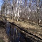 Вдоль главного ручья в Удельном парке.