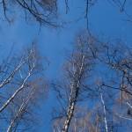 Небесная синева. В Удельном парке.