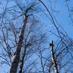 Майская синева в Удельном парке. А до грибов еще далеко.