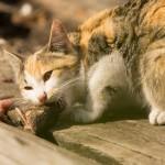 Кошачий обед. Щучьи головы - настоящий деликатес...