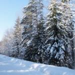 Зимняя лесная дорога.