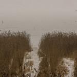 Февраль. У Ладожского озера.