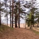 В Репино. На песчаных холмах у Финского залива.