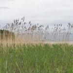 На берегу Финского залива  в Ольгино.