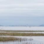 На берегу Финского залива. Лахта-Ольгино.