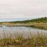 На берегу Финского залива. Здесь пока нет шашлычечников.