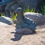 Котка. Тюлень в парке Сапокка.
