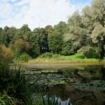 Парк Лесотехнической академии. Сердобольский пруд в конце августа.