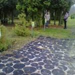 Старооскольский дендропарк Ильины. Дубовые дорожки в парке.