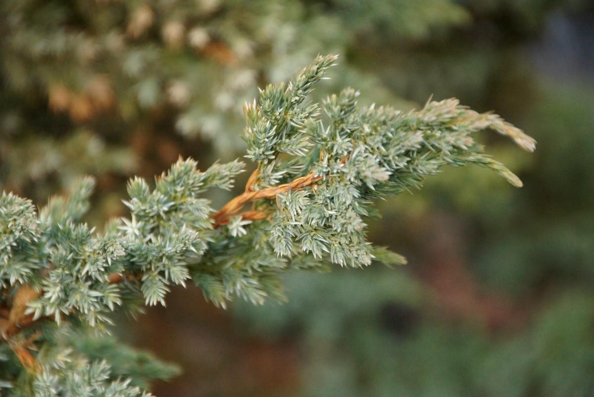 Секс русский ботаник 19 фотография