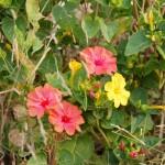 Цветы на Крите. У раскопок гробницы Минойского периода.