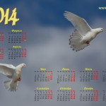 Календарь 2014, пара голубей