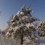 Зимний пейзаж. Январь.