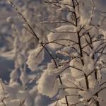 Снежные украшения кустов.