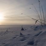 На Ладожском озере в январе. Река Кобона.