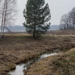 Пушкинские Горы: Петровское. Ручей, впадающий в озеро Кучане.