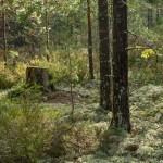 Почти сказочный лес.