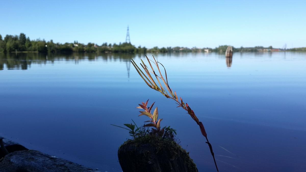 Карелия. Сегежа. На озере. Здесь любая вода - Озеро.